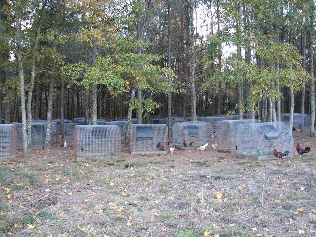 Game Fowl Farms